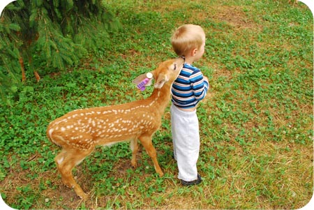 fees and fawns can come back to bite you