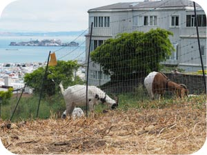 city grazing san francisco
