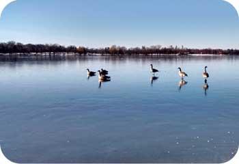 geesewalkonwater