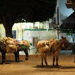 burros in the night