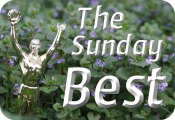 SundayBest